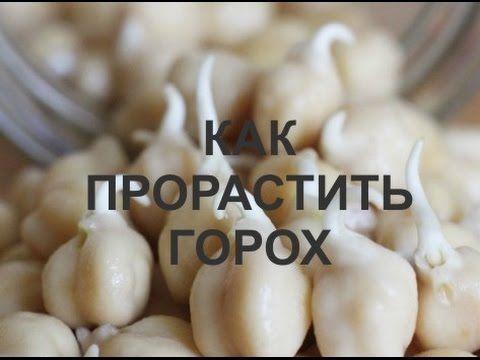 Как прорастить горох (простой видео рецепт Домашние рецепт. Нут рецепты)