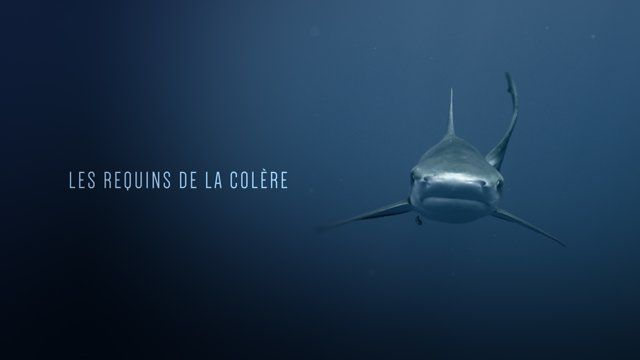 Opening title for documentary LES REQUINS DE LA COLERE directed by Jérôme Delafosse. Art direction and post production by Cokau Lab. http://www.canalplus.fr/c-infos-documentaires/pid7961-c-les-requins-de-la-colere.html  http://cokaulab.com/ follow us facebook.com/cokau twitter.com/cokaulab