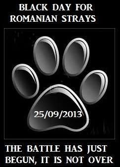 LIVE FROM ROMANIA: the Constitutional Court has approved the law. Dogs can be killed.  http://www.mediafax.ro/