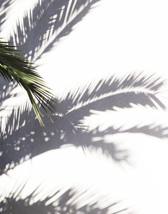 Palm Tree Print Palm Tree Shadows Shadow Play Minimalist Archival Print Minimalism Modern P With Images Palm Tree Silhouette Palm Tree Artwork Los Angeles Palm Trees