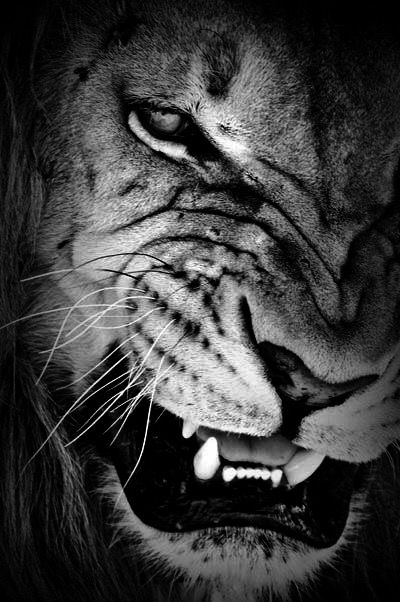 Be sober, be vigilant, because your adversary, the devil, as a roaring lion walketh about, seeking whom he may devour.  Whom resist steadfast in the faith, knowing that the same afflictions are accomplished in your brethren that are in the world. 1 Peter 5:8-9 KJV
