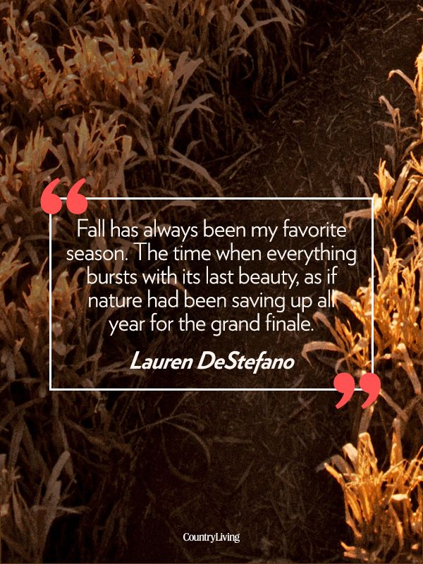 42 Quotes That Will Make You Fall In Love With Autumn Autumn