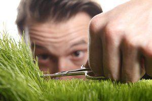 Ratgeber mit Tipps für den perfekten englischen Rasen