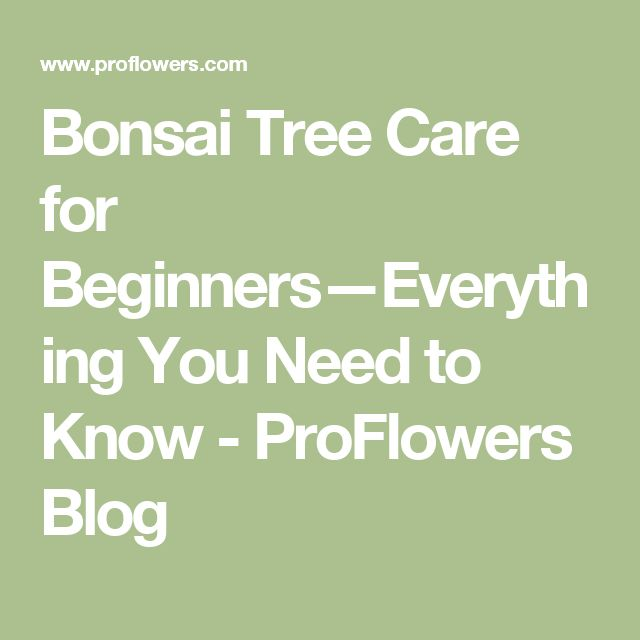 Bonsai Tree Care for Beginners—Everything You Need to Know - ProFlowers Blog