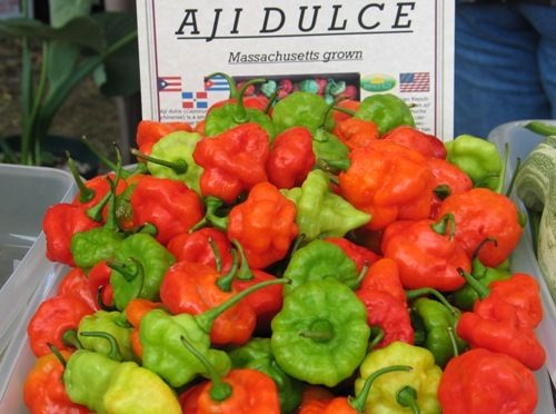 Ají dulce (Capsicum chinense) is a small, light green pepper that turns red if left long enough on the plant. It has the shape and size of a habanero pepper without the intense heat.     This pepper is used to season dishes and is an important ingredient for sofrito, a sauce used in several Latin American cuisines.   Seed: http://www.caribbeanseeds.com/ajidulcechato.htm#