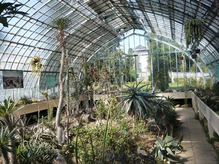 Aloe striata , jardin des serres d'Auteuil