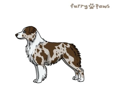 Furry Paws // WCH Kip's Western Style [3STM 19HH 1.513] *BoB*'s Kennel