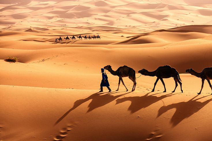 The formidably beautiful #SaharaDesert is the world's largest hot desert, located in North Africa which stretches from the Red Sea to the Atlantic Ocean. http://www.artipot.com/articles/2086161/what-places-one-need-to-visit-during-his-sahara-desert-tour.htm