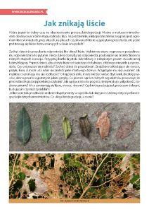 Pierwszy Dzień Jesieni – jak znikają liście? http://www.ekokalendarz.pl/pierwszy-dzien-jesieni-jesienny-pakiet-edukacyjny/