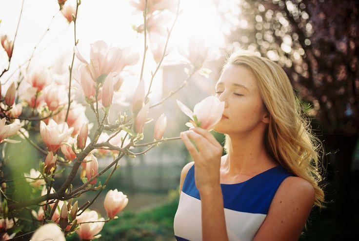 magnolia-slnko