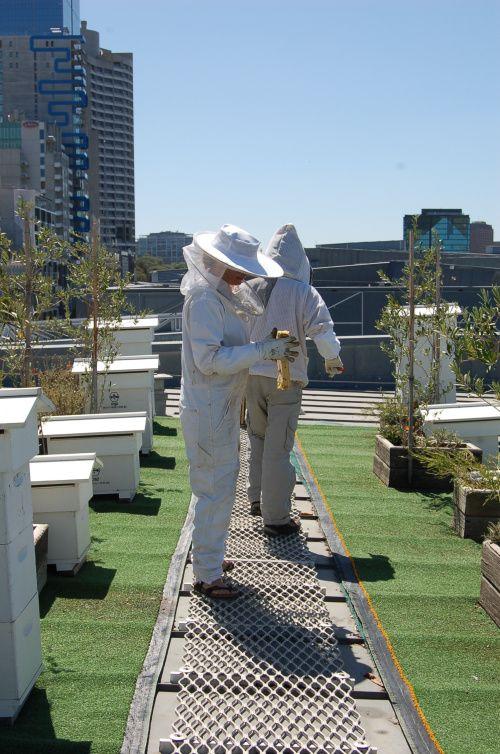 http://www.vanishingelephant.com/journal/2014/02/12/rooftop-honey/  #FedSquare #Melbourne