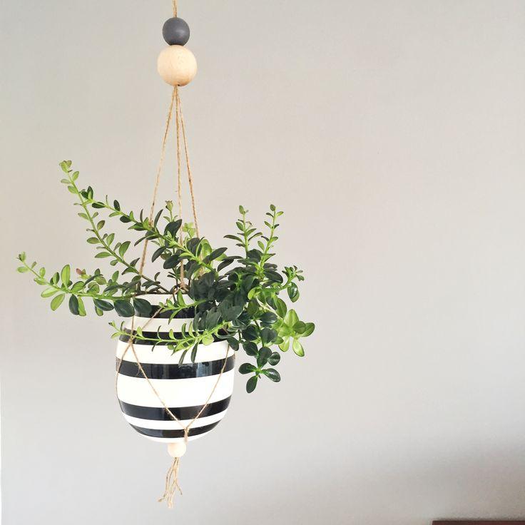 DIY Hængeplanter   Living on a budget
