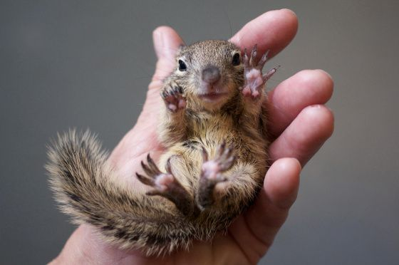 "This baby squirrel is totally whispering ""Jazz hands."" - Imgur"
