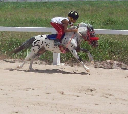 Its a mini jockey on a mini horse!