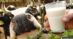 original-milk-or-raw-milk-1024x576