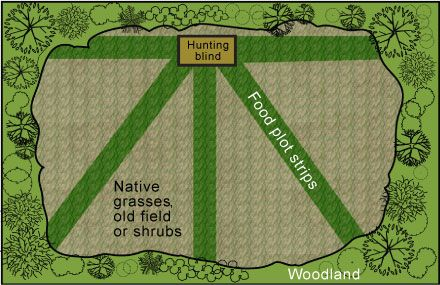 Food plot designs with shooting lanes