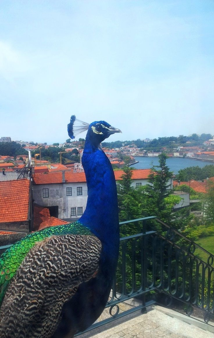 The Yeatman fauna and flora | Surrounded by a more extensive green area than any other hotel in Porto. Set in seven acres of private landscaped gardens, its grounds provide guests with a serene and tranquil retreat from the bustle of the city. #Porto #portugal #portoholidays #dourovalley