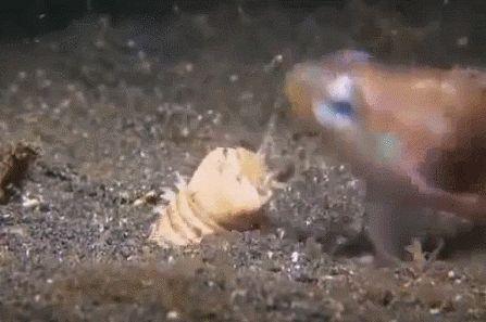 Рыбку съели (  #gif #рыба #вода