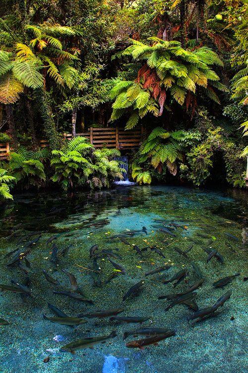 M s de 1000 ideas sobre estanques en pinterest estanques - Estanques para jardines ...
