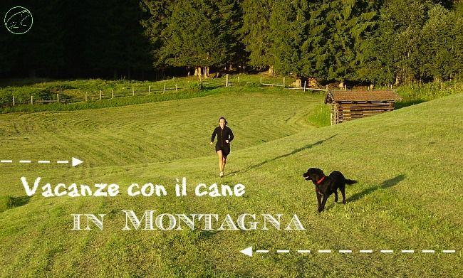 Vacanze con il cane in montagna, consigli utili per escursioni