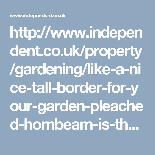 http://www.independent.co.uk/property/gardening/like-a-nice-tall-border-for-your-garden-pleached-hornbeam-is-the-way-to-go-948104.html