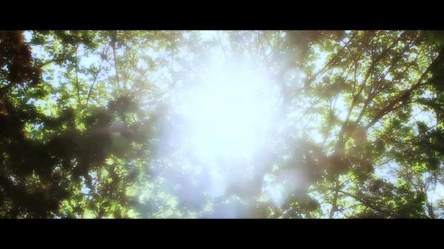 perfection | Timelapse [ Backyard Sun ]