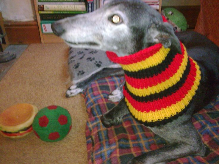 Knitting Patterns For Greyhound Hats : 23 Best images about greyhound snoods on Pinterest For ...