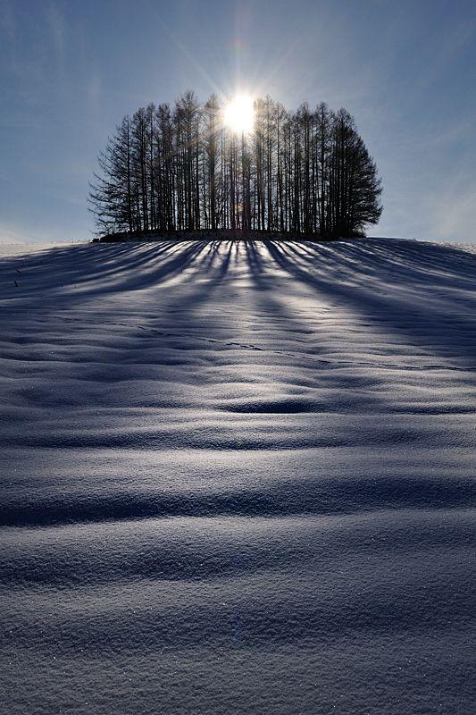 The Sun and Shadows,  Winter in Biei, Hokkaido, Japan