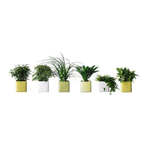 51 Best Images About Ikea Slaapkamer On Pinterest Sansevieria Trifasciata Plant Pots And