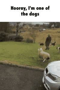Is...is that a sheep?...yup that's a sheep