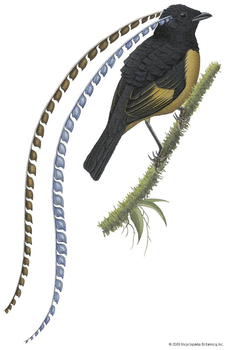 10 best birds images on Pinterest | Bird of paradise, Exotic birds ...