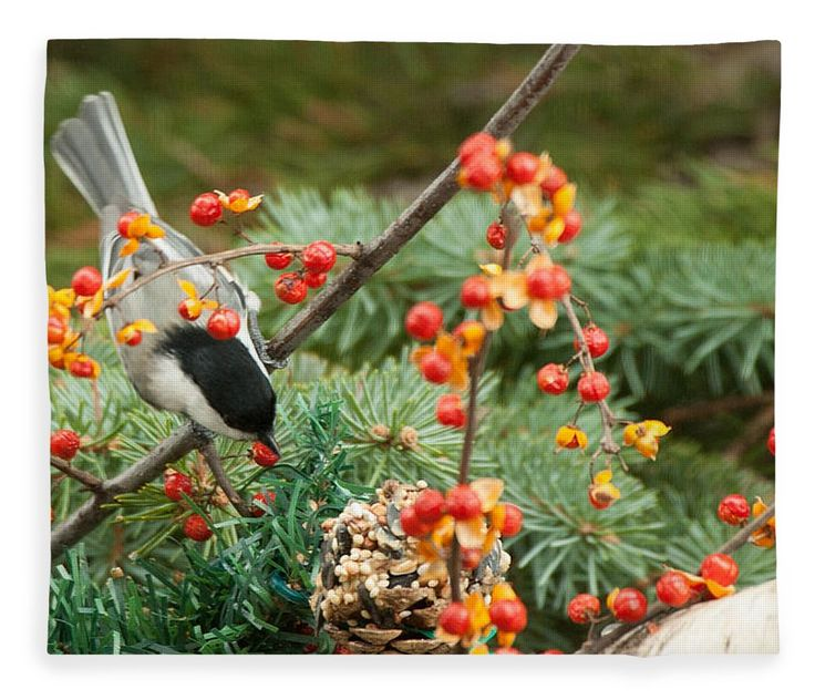 new England Fleece Blanket featuring the photograph Chickadee Berry Picking by Jeff Folger