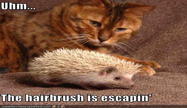 15 Perfect Hedgehog Memes To Make You Laugh Through The Weekend