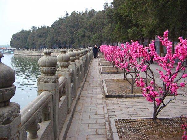 Summer Palace, Beijing, China. #pink