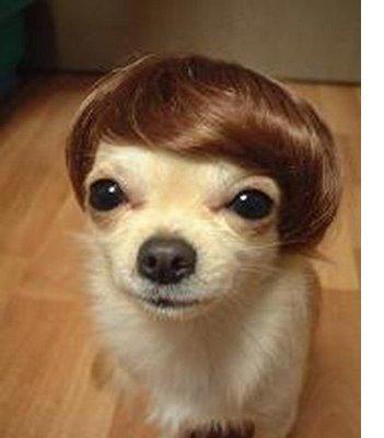 el-pelo-del-perro