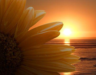"""Check out new work on my @Behance portfolio: """"Fotomanipulacja - oświetlenie kwiatu"""" http://on.be.net/1NJgiq0"""