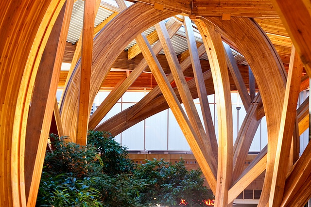 Detail of glulam 'trees' in the public atrium near the entrance to the newly renovated Credit Valley Hospital by the Farrow Partnership architects.    The Carlo Fidani Peel Regional Cancer Centre and Vijay Jeet and Neena Kanwar Ambulatory Care Centre. Part of the renovation of the Credit Valley Hospital in Mississauga, Ontario.