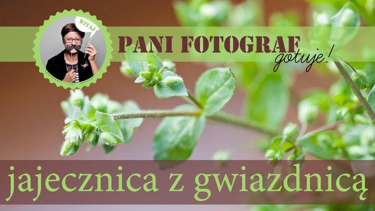 Tę rośline znajdziesz na trawniku lub w parku pod drzewami - Jajecznica z gwiazdnicą - przepis z książki Dzika Kuchnia