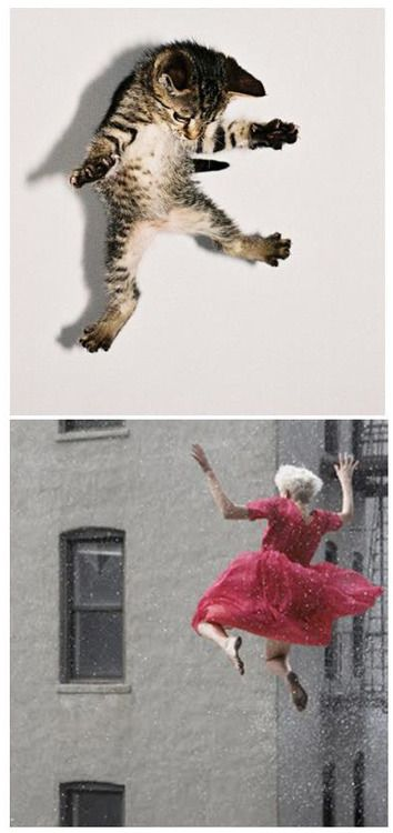 Hoorah! It's nearly the weekend!! Happy feline=fashion friday. Cat found on pinterest and fashion shot of Agyness is by the talented Ryan Mcginley.