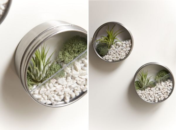 """Terrarium magnets.  What a cute idea.  Made by folks at """"ruffled"""" for wedding favors."""