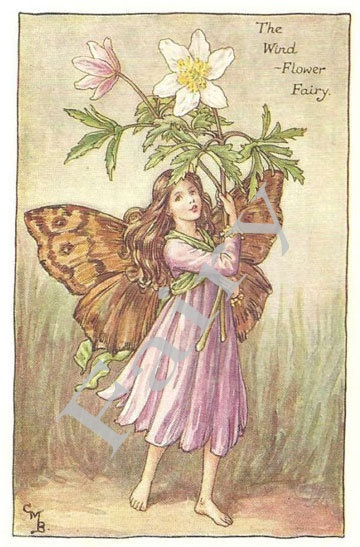 The Wind Flower Fairy from 'Flower Fairies of the Spring' by Cicely Mary Barker -  PRINT. $5.95, via Etsy.