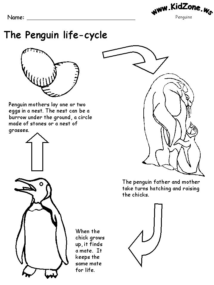 Printable Penguin life cycle sheet.