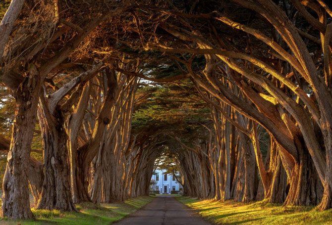 Кипарисовый тоннель, США