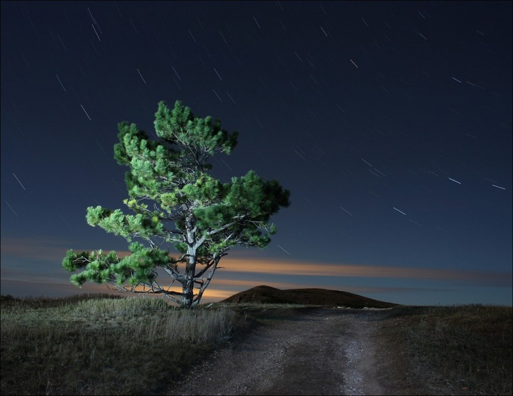 Star rain | field, night, road, pine, shooting stars