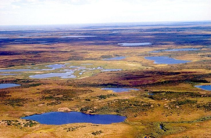 File:Tundra in Siberia.jpg - Wikimedia Commons