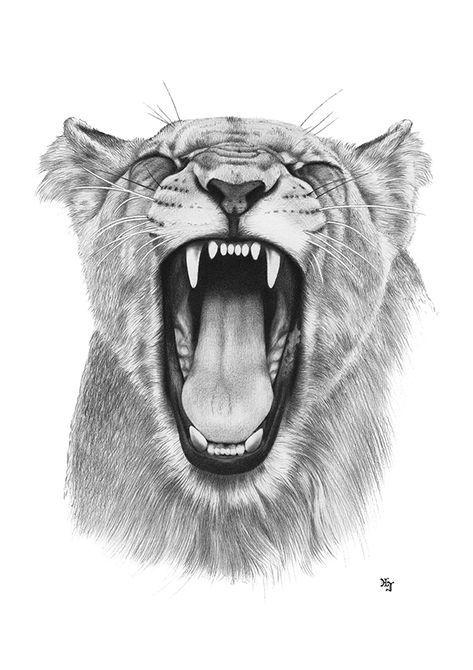 Bleistiftzeichnung Löwin Kopf 1 DIN A4 von Josef Hinterseer – Zeichnungen