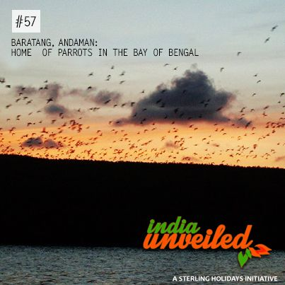Located about 100 kilometres from Andaman's capital of Port Blair are the Baratang islands known for its sandy beaches, tidal swamp forests, and lime stone caves. However, the most stunning view of these islands is that of thousands of parrots returning home at sunset to the Islands. According to scientists, these birds have thrived in these islands because of the special climatic conditions and lack of predators.