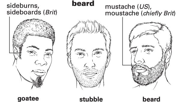 Beard - Definition for English-Language Learners from Merriam-Webster's Learner's Dictionary