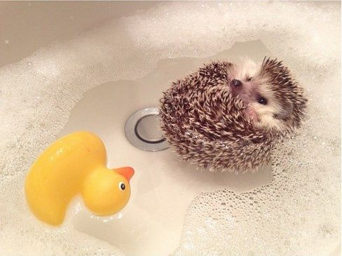 This hedgehog life more interesting will be my