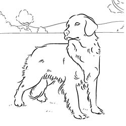 Golden Retriever Puppy Coloring Pages Coloring Pages Afvere